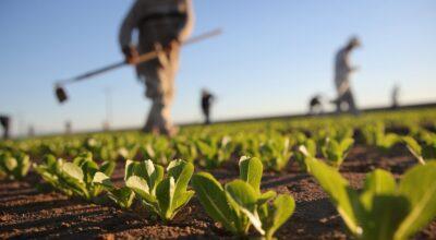 Attivato lo Sportello Informativo Agricoltura a Rutigliano.